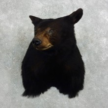 Black Bear Shoulder Taxidermy Head Mount For Sale #18857 @ The Taxidermy Store