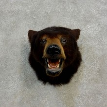 Black Bear Head Mount For Sale #17175 @ The Taxidermy Store