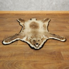 Blonde Alaskan Wolverine Rug For Sale #17851 @ The Taxidermy Store