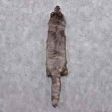 Blue Arctic Fox Taxidermy Hide - Skin - Fur #12441 For Sale @ The Taxidermy Store