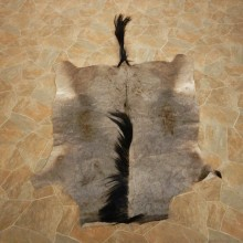 Blue Wildebeest Hide Mount For Sale #14900 @ The Taxidermy Store