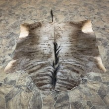 Blue Wildebeest Taxidermy Rug For Sale #22754 @ The Taxidermy Store