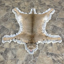 Bobcat Taxidermy Rug Mount For Sale #25268 @ The Taxidermy Store