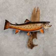 Brook Trout Fish Mount For Sale #20349 @ The Taxidermy Store