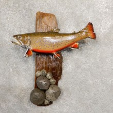 Brook Trout Fish Mount For Sale #20557 @ The Taxidermy Store