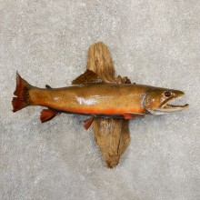 Brook Trout Fish Mount For Sale #20843 @ The Taxidermy Store