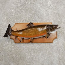 Brook Trout Fish Mount For Sale #20941 @ The Taxidermy Store