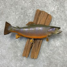Brook Trout Fish Mount For Sale #22314 @ The Taxidermy Store