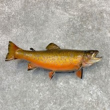 Brook Trout Fish Mount For Sale #22492 @ The Taxidermy Store