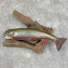 Brook Trout Fish Mount For Sale #23563 @ The Taxidermy Store