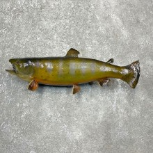 Brook Trout Fish Mount For Sale #24394 @ The Taxidermy Store