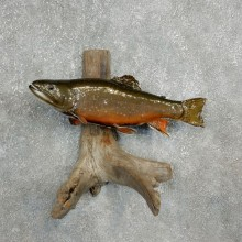 Brook Trout Fish Mount For Sale #17803 @ The Taxidermy Store