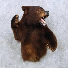 Brown Bear 1/2-Life-Size Mount For Sale #14475 @ The Taxidermy Store