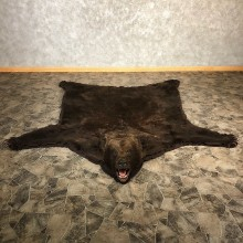 Brown Bear Full-Size Taxidermy Rug For Sale 20084 @ The Taxidermy Store