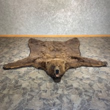 Brown Bear Full-Size Taxidermy Rug For Sale #21178 @ The Taxidermy Store