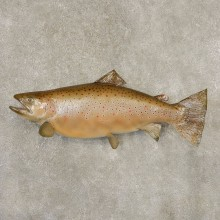 Brown Trout Fish Mount For Sale #21603 @ The Taxidermy Store