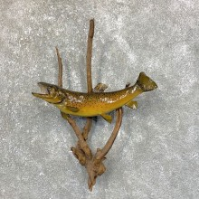Brown Trout Fish Mount For Sale #23899 @ The Taxidermy Store