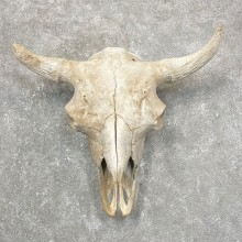 Buffalo Bison Skull Mount For Sale #24422 @ The Taxidermy Store