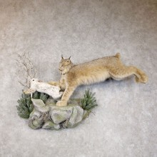 Canadian Lynx Life-Size Mount For Sale #22585 @ The Taxidermy Store