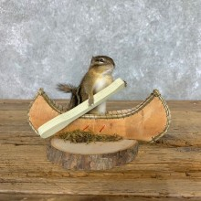 Canoe Chipmunk Novelty Mount For Sale #22615 @ The Taxidermy Store