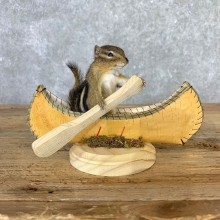 Canoe Chipmunk Novelty Mount For Sale #23241 @ The Taxidermy Store