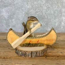 Canoe Chipmunk Novelty Mount For Sale #23244 @ The Taxidermy Store