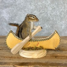 Canoe Chipmunk Novelty Mount For Sale #23246 @ The Taxidermy Store