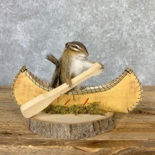 Canoe Chipmunk Novelty Mount For Sale #23247 @ The Taxidermy Store
