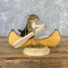 Canoe Chipmunk Novelty Mount For Sale #23248 @ The Taxidermy Store
