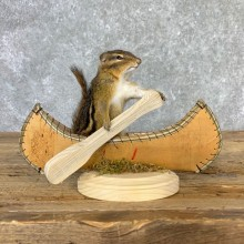 Canoe Chipmunk Novelty Mount For Sale #23250 @ The Taxidermy Store
