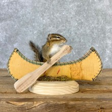 Canoe Chipmunk Novelty Mount For Sale #23251 @ The Taxidermy Store