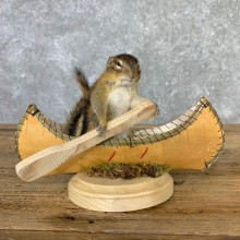 Canoe Chipmunk Novelty Mount For Sale #23253 @ The Taxidermy Store
