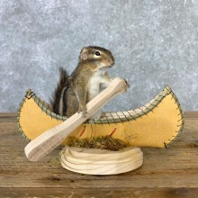 Canoe Chipmunk Novelty Mount For Sale #23254 @ The Taxidermy Store