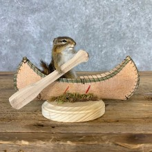 Canoe Chipmunk Novelty Mount For Sale #23255 @ The Taxidermy Store