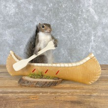 Canoe Grey Squirrel Novelty Taxidermy Mount For Sale