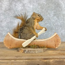 Canoe Squirrel Novelty Mount For Sale #22421 @ The Taxidermy Store