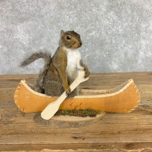 Canoe Squirrel Novelty Mount For Sale #22431 @ The Taxidermy Store