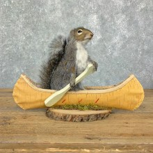 Canoe Squirrel Novelty Mount For Sale #23068 @ The Taxidermy Store