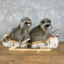 Canoeing Pals Novelty Mount For Sale #23414 @ The Taxidermy Store