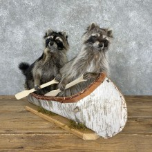 Canoeing Pals Novelty Mount For Sale #24072 @ The Taxidermy Store