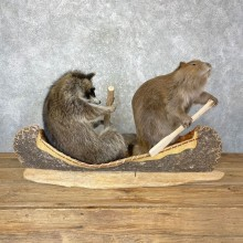 "Canoeing ""Pals"" Novelty Taxidermy Mount For Sale"