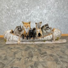 Canoeing Pals Novelty Mount For Sale #25300 @ The Taxidermy Store