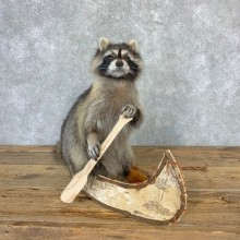 Canoeing Raccoon Novelty Mount For Sale #23201 @ The Taxidermy Store