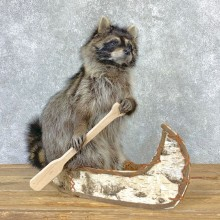 Canoeing Raccoon Novelty Mount For Sale #23202 @ The Taxidermy Store