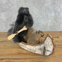 Canoeing Squirrel and Skunk Novelty Mount For Sale #21488 @ The Taxidermy Store