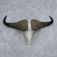 Cape Buffalo Skull Horns Mount For Sale #13908 For Sale @ The Taxidermy Store