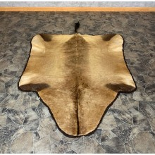 Cape Hartebeest Tanned Skin Taxidermy Rug For Sale #22545 @ The Taxidermy Store