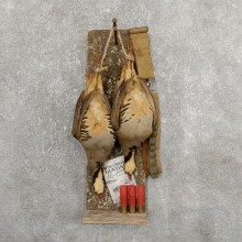 Captain's Classic Chukar Display Taxidermy Mount #19745 For Sale @ The Taxidermy Store