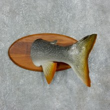 Captain's Classic Novelty Lake Trout Taxidermy Mount For Sale #17955 @ The Taxidermy Store