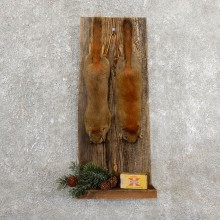 Captain's Classic Red Squirrel Display Taxidermy Mount #19738 For Sale @ The Taxidermy Store